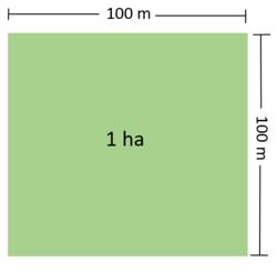 1 Hektar Berapa Meter