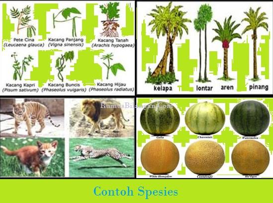 Contoh Spesies