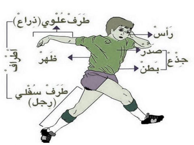 Bahasa Arab Anggota Tubuh Kosakata Beserta Artinya