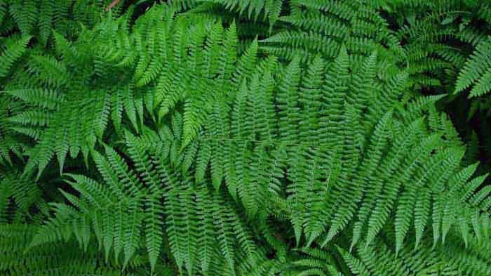Klasifikasi Tumbuhan (Kingdom Plantae)