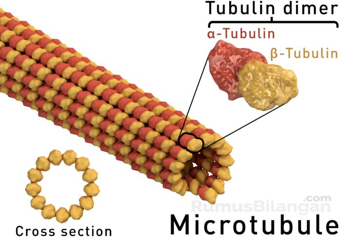 Bagian Mikrotubulus