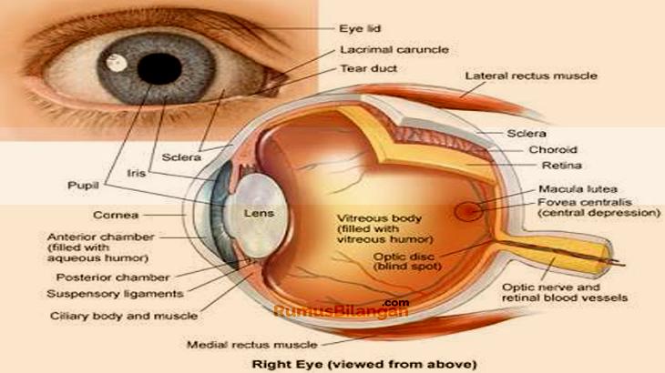 Struktur Mata Dan Bagian Serta Fungsinya