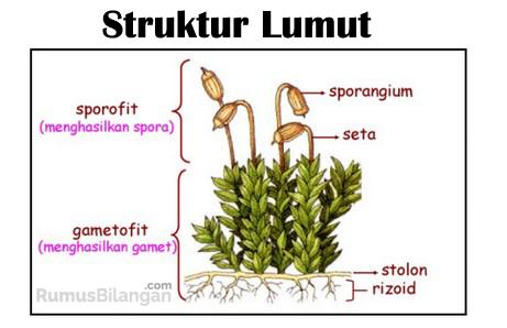 Struktur Dari Tubuh Lumut
