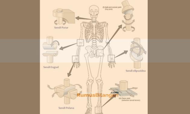 Struktur dan Bagian Fungsi Sendi
