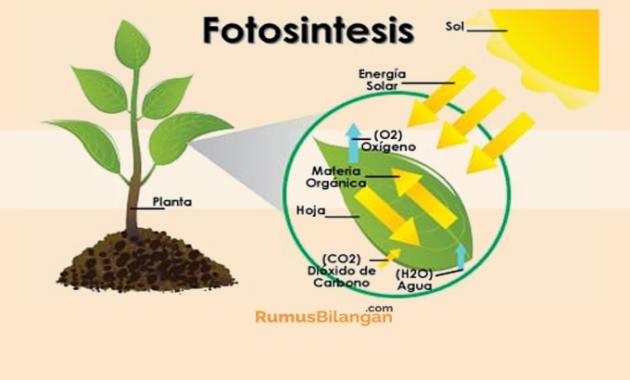 Fungsi Dari Fotosintesis
