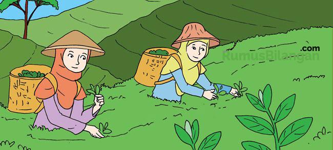 Jenis Usaha dengan Mengolah Sumber Daya Alam perkebunan teh