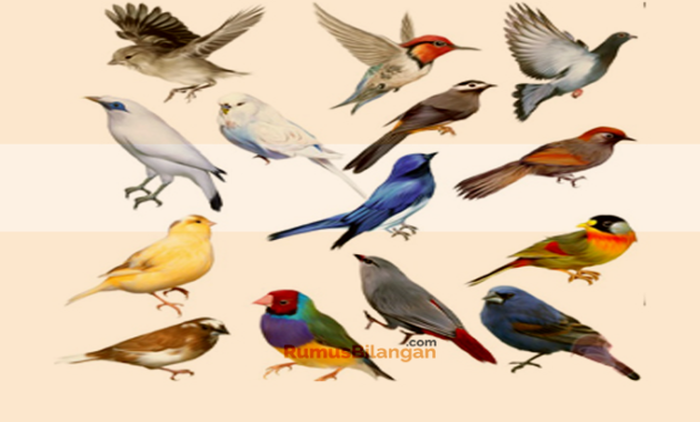Klasifikasi Aves