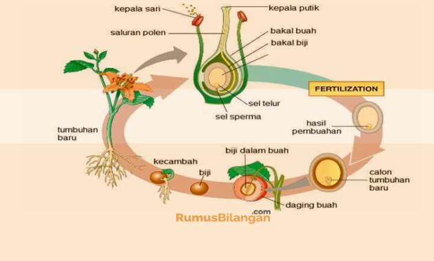 Klasifikasi tumbuhan Angiospermae