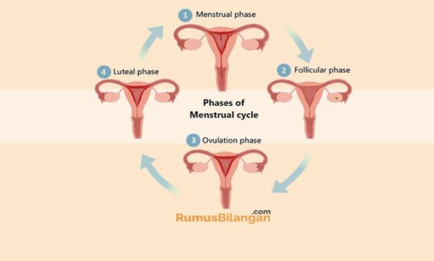 Proses Terjadinya Menstruasi