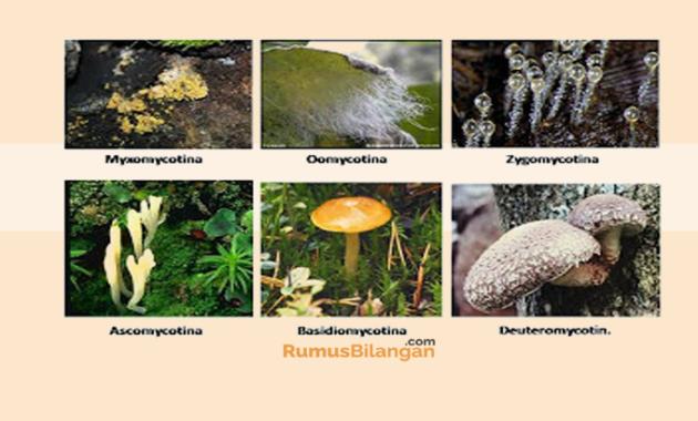 Perbedaan Antara Protista Mirip Jamur Dan Jamur Sejati