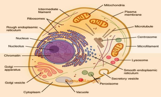 Sitoplasma Dalam Sel Hewan