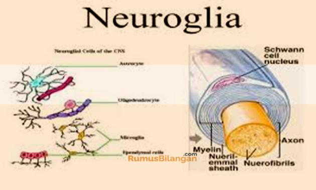 Struktur Dan Jenis Dari Neuroglia