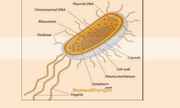 Struktur Tubuh Archebacteria