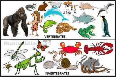Vertebrata dan Invertebrata