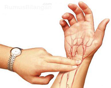 Struktur Dari Arteri