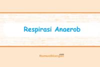 pernyataan yang benar berkaitan dengan respirasi anaerob ...
